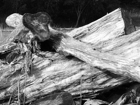 Holzabfall