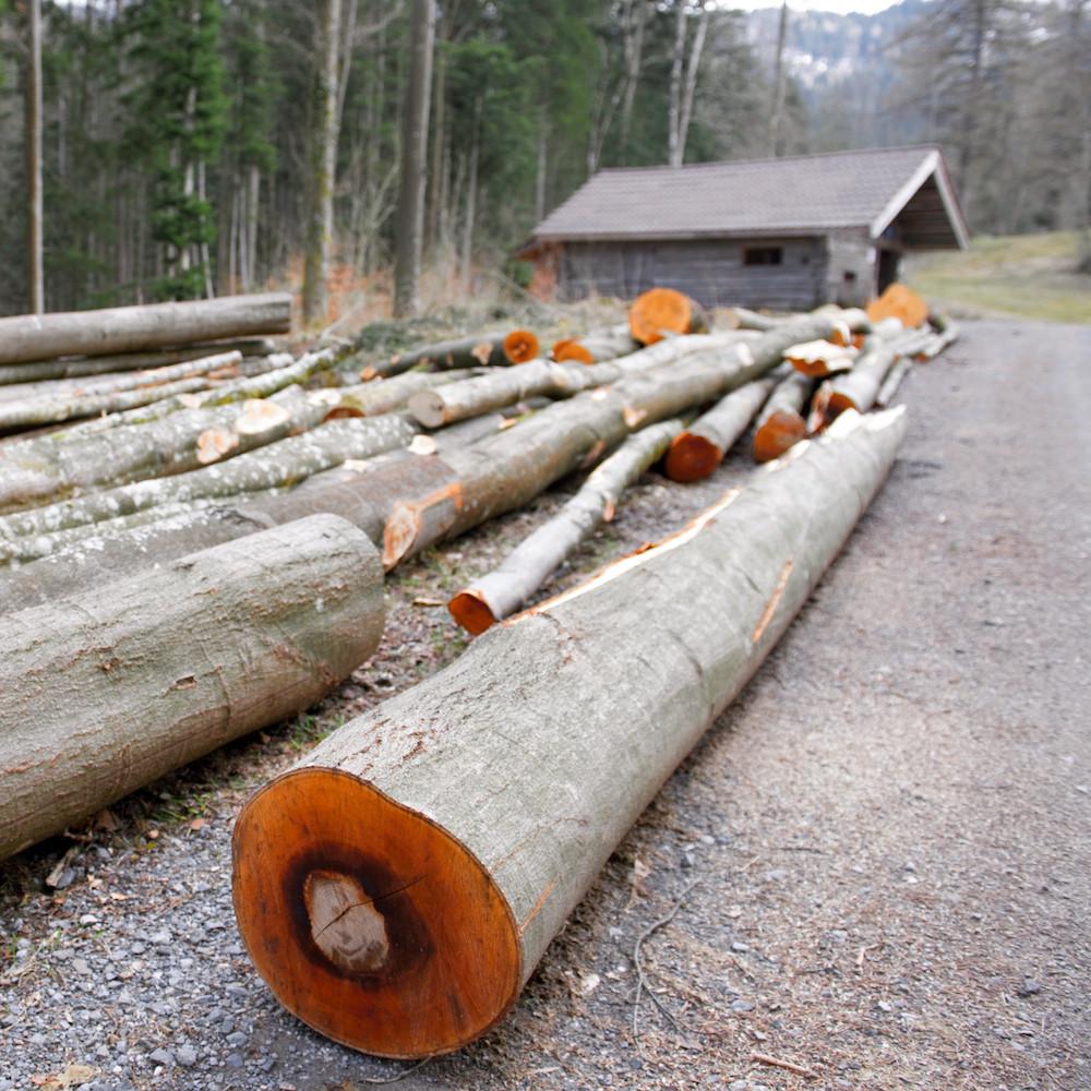 Holzfällerhütte