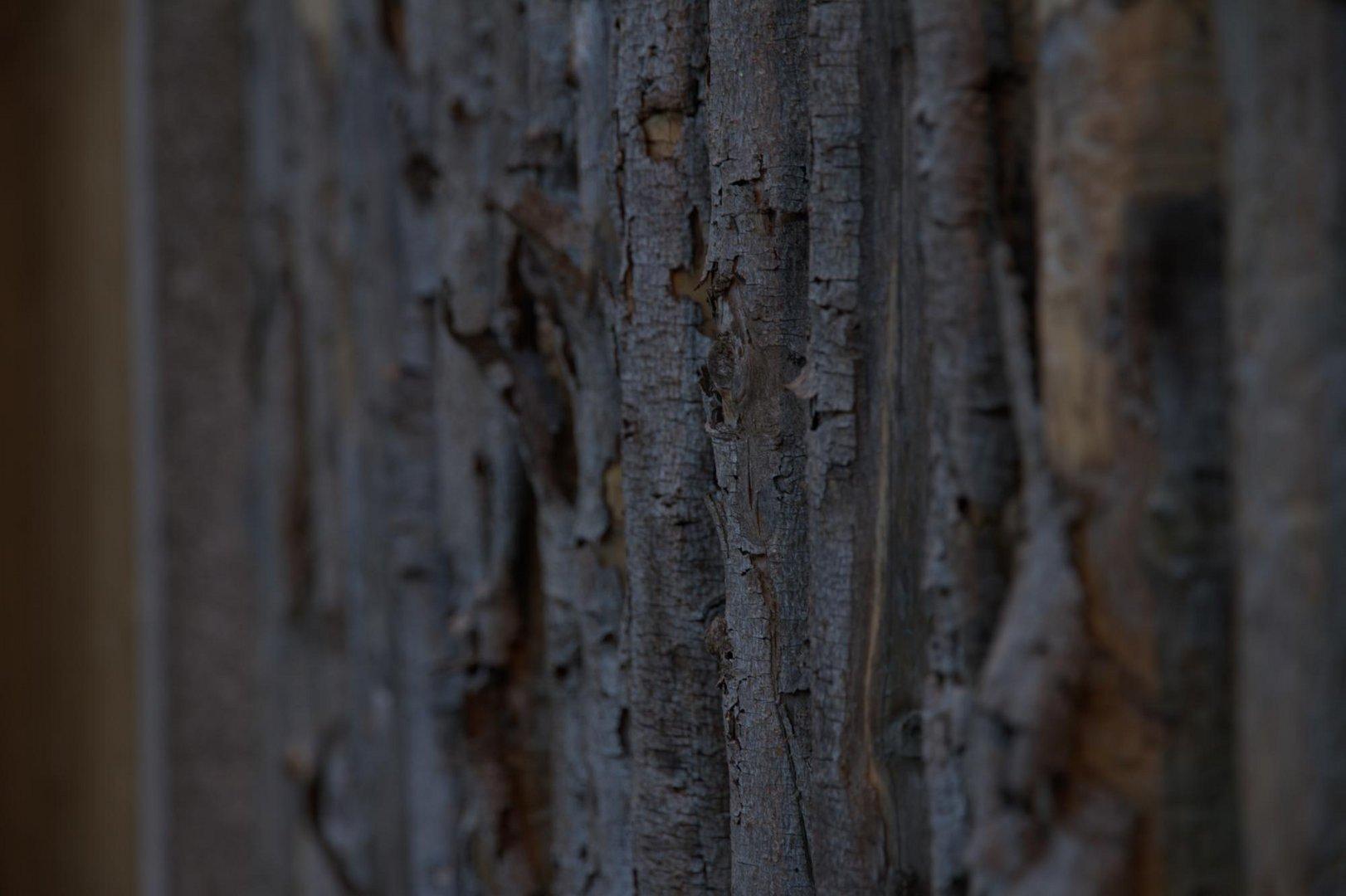 Holzfokus