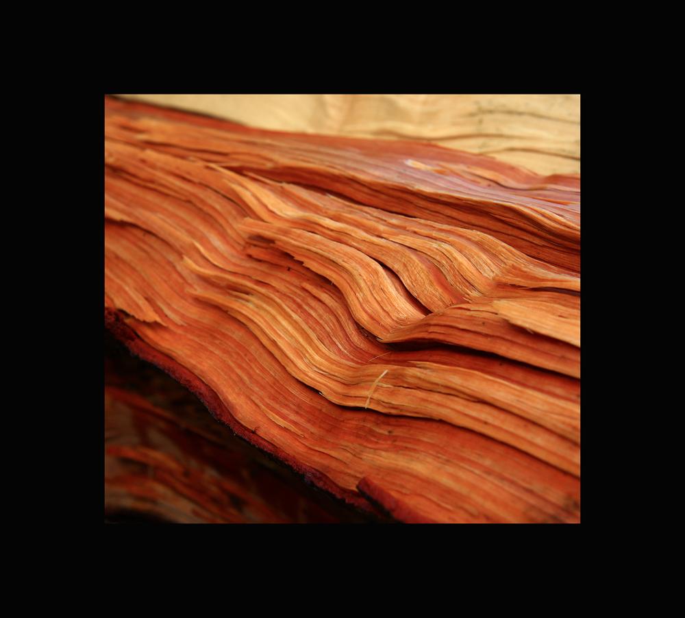 Holzgeschichte