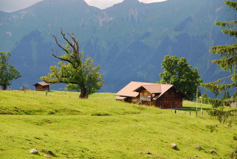 Holzhütte mit altem Baum