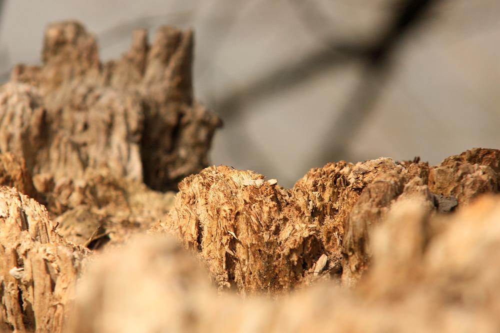 Holziger Höhenzug