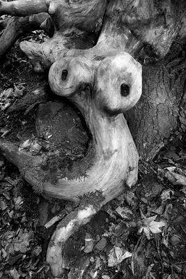 Holzmonster