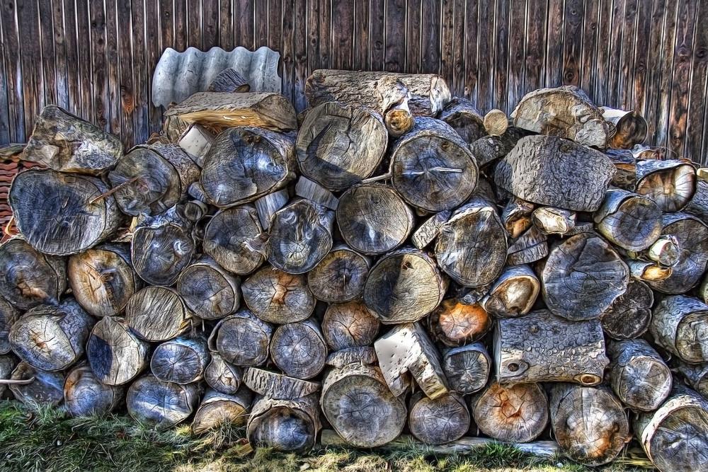 Holzsstämme Stilleben EBV