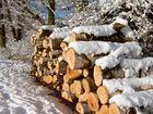 Holzstapel im Schnee