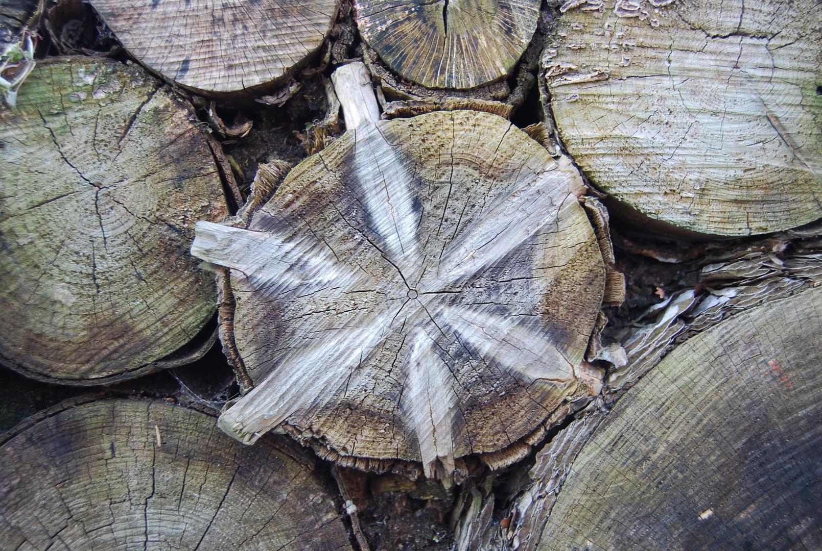 Holzstern