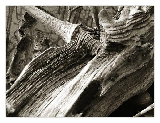 Holzstruktur I