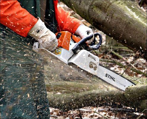 Holzwirtschaft - aber sicher !