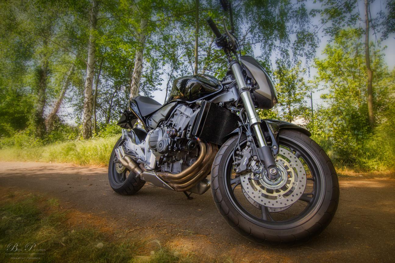 Honda Hornet -2-