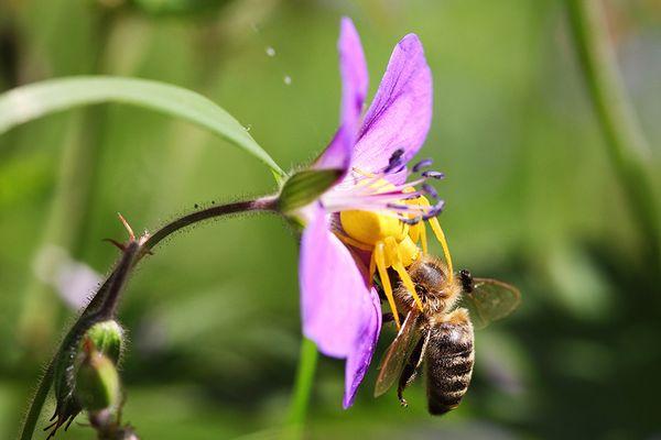 honeysweet
