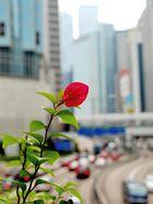 Hong Kong Flower