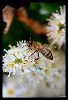 Honig der Zukunft
