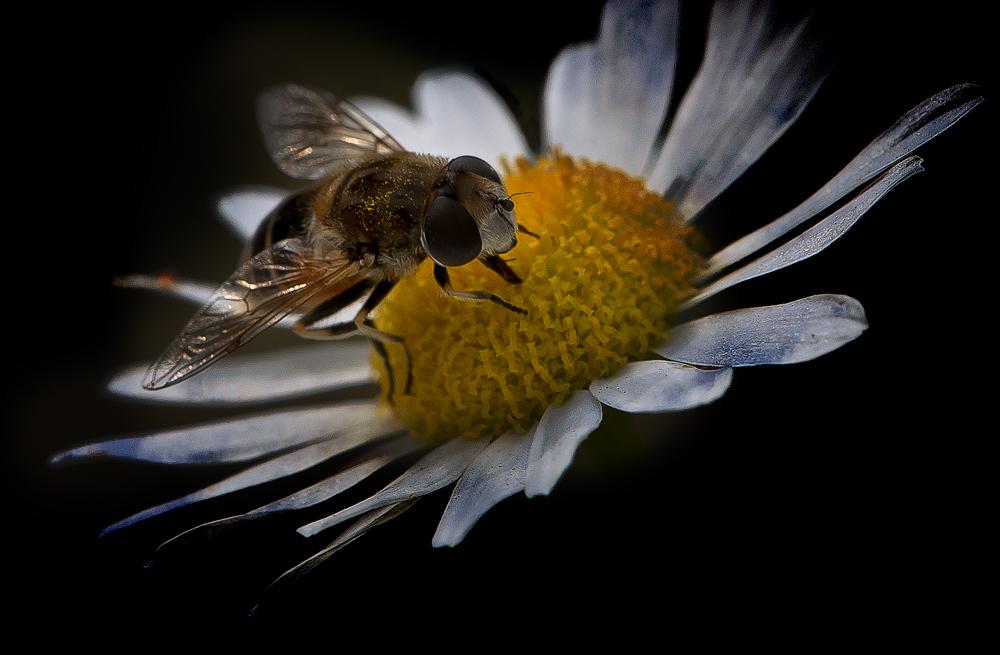 Honig ist gesund