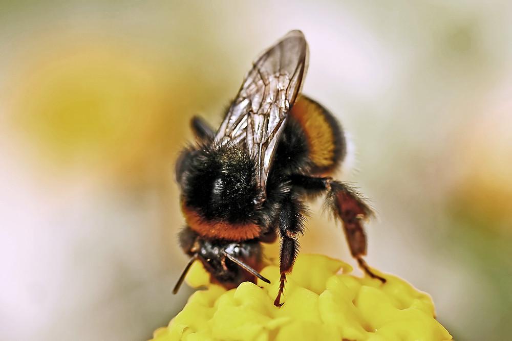 Honig-Produzent
