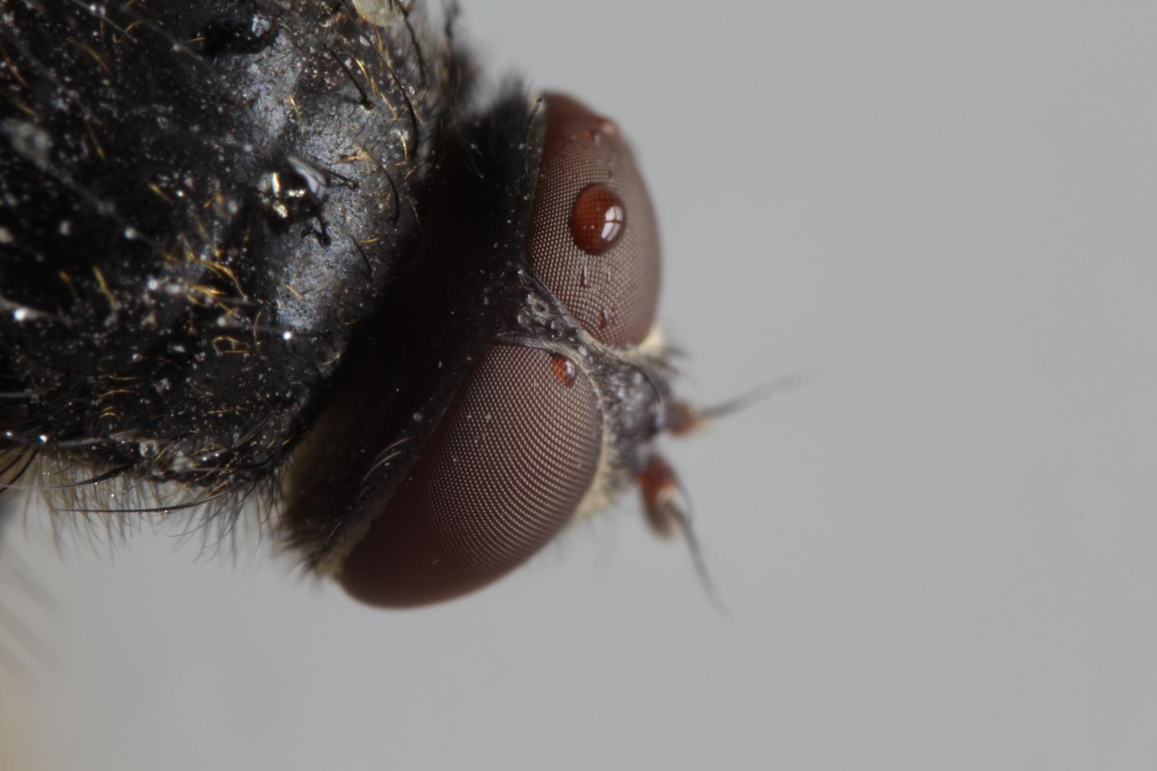 Honig schlecken Teil 2