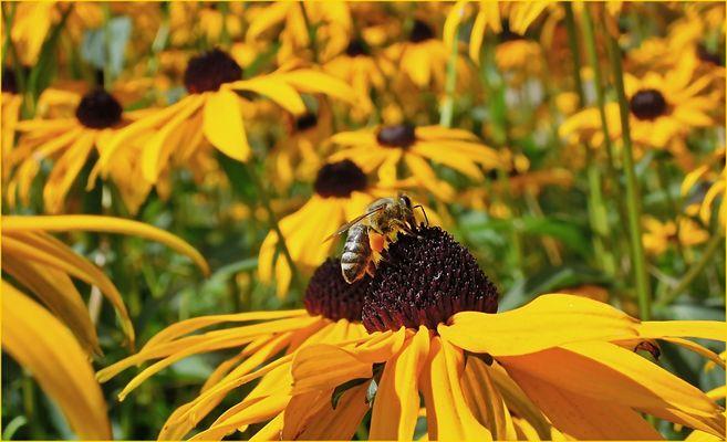 Honig und Stachel
