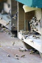 Honigfabrik