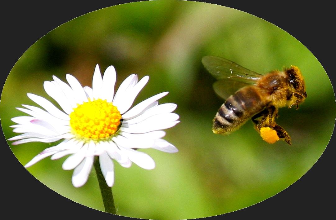 Honigmaschiene
