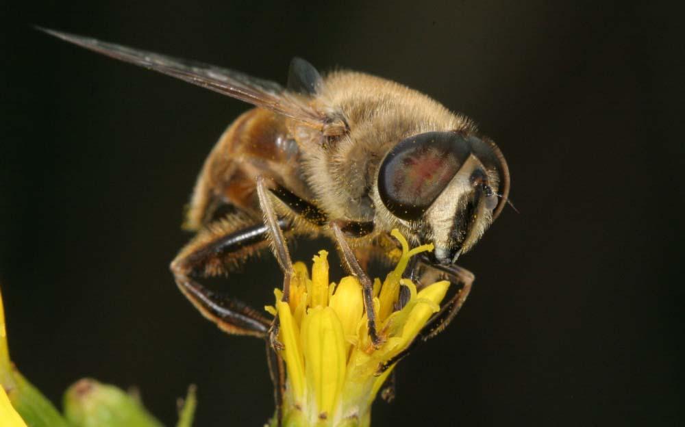 Honigzeit