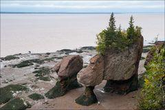 [ Hopewell Rocks ]