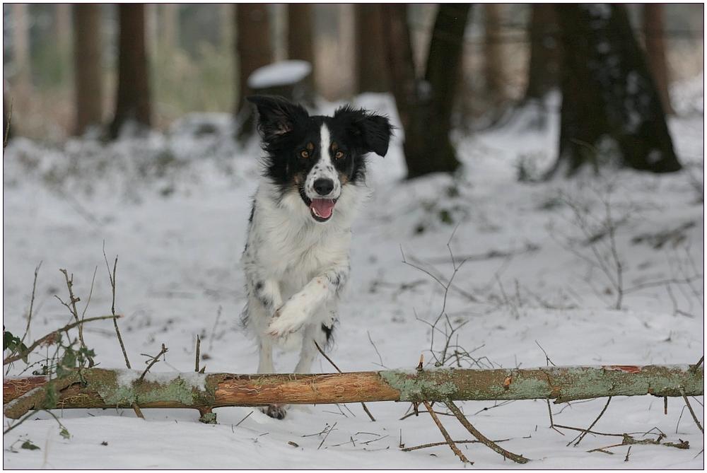 Hopp... durch den Wald...