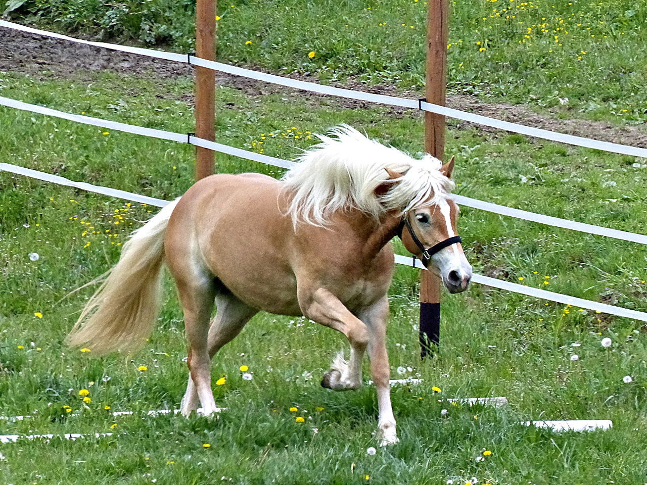 Hopp,hopp hopp Pferdchen lauf Galopp