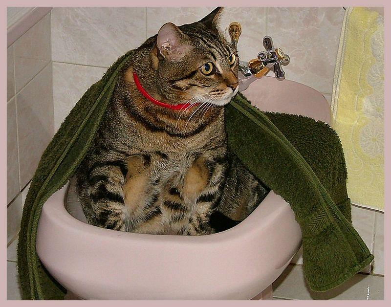 Hora do Banho do meu Soneca!!!!!