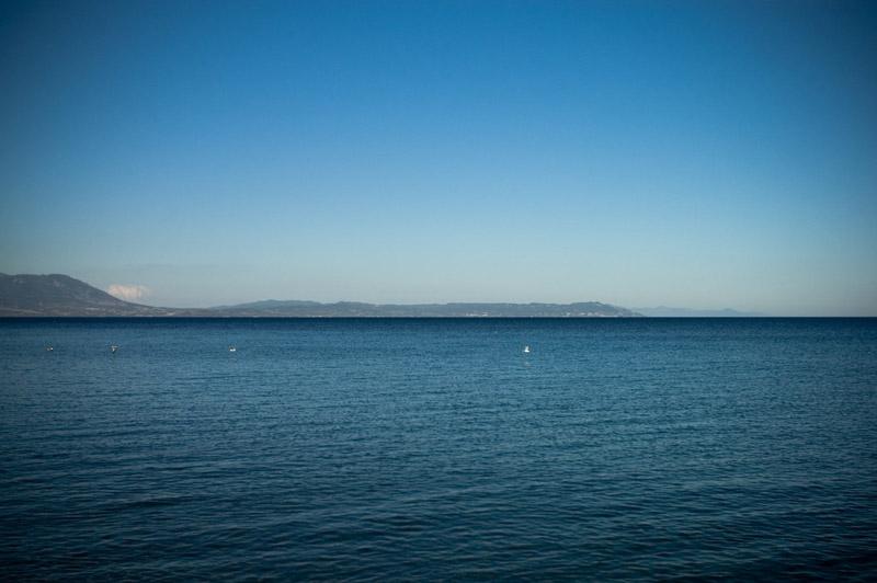 horizon birds