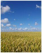 Horizont in Ostfriesland ,es verschmelzen Himmel und Erde