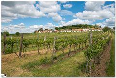 Horizont Weinviertel 4