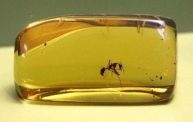 hormiga en ámbar