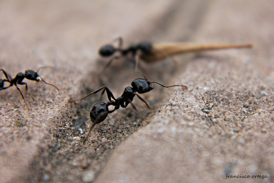hormigas a trabajar