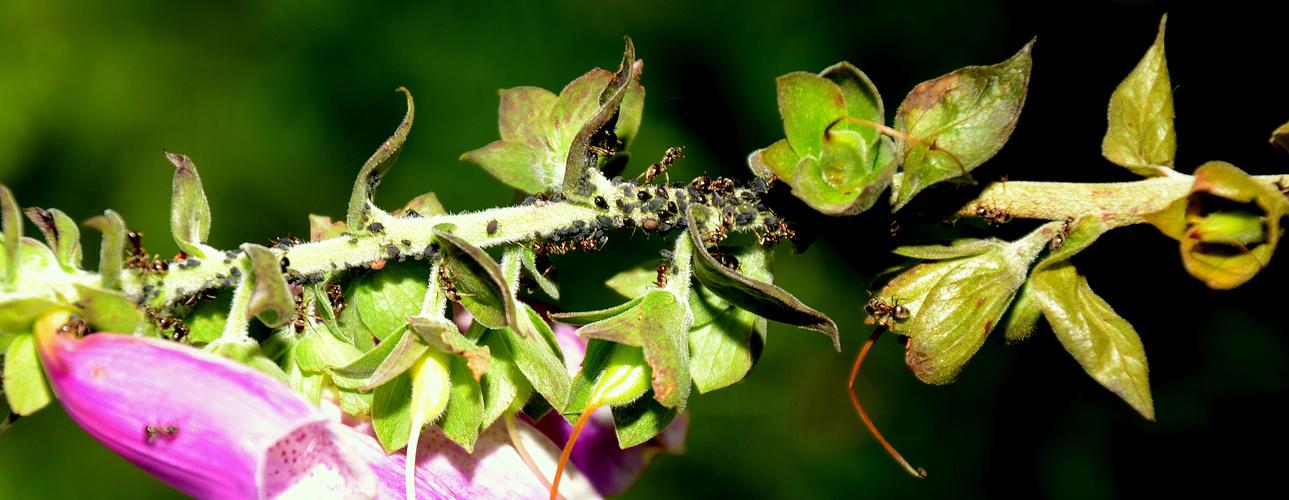 hormigas en el arbol