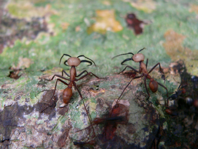 Hormigas en la Selva
