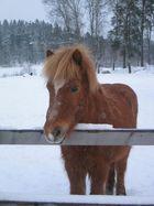 Horse,