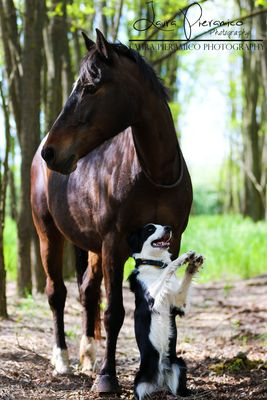 horse and dog trick duo