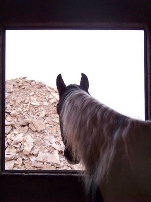 Horse and stones