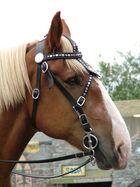Horse at Rennaisance Festival