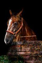 - Horse -