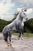 - Horse Dancing 2 -