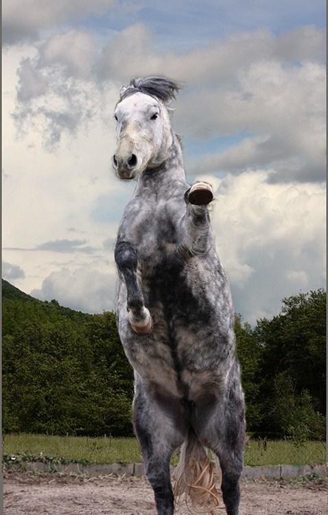 - Horse Dancing -