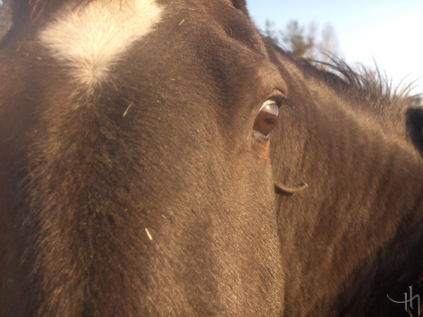 Horse eye..