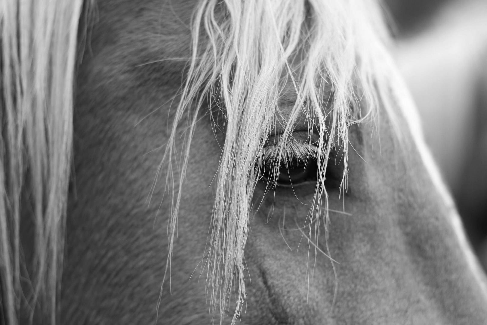Horse- Eye