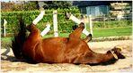 . horse gym II .