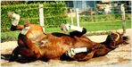 . horse gym IV .
