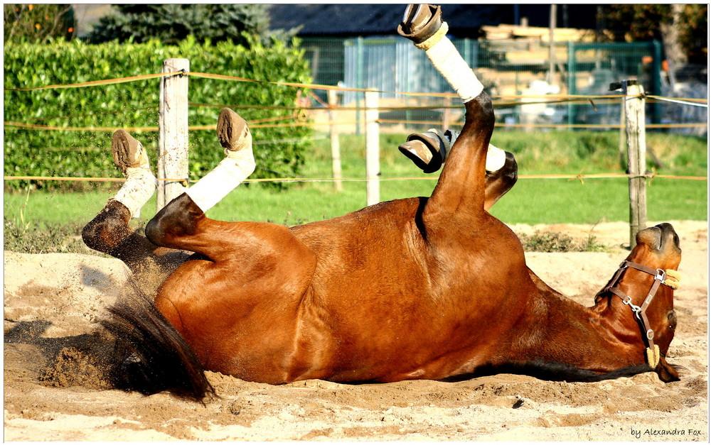 . horse gym V .