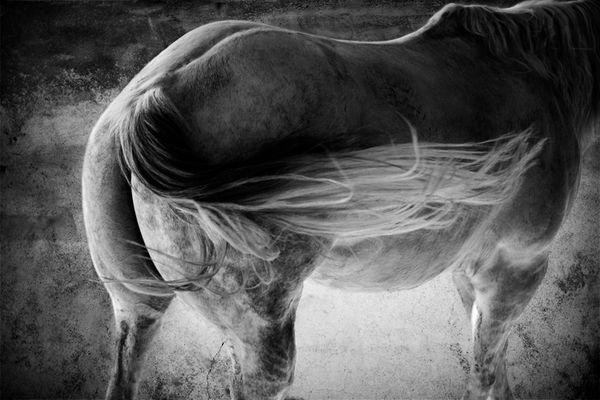Horse Impression #3