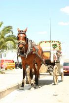 horse nafplio (greece)