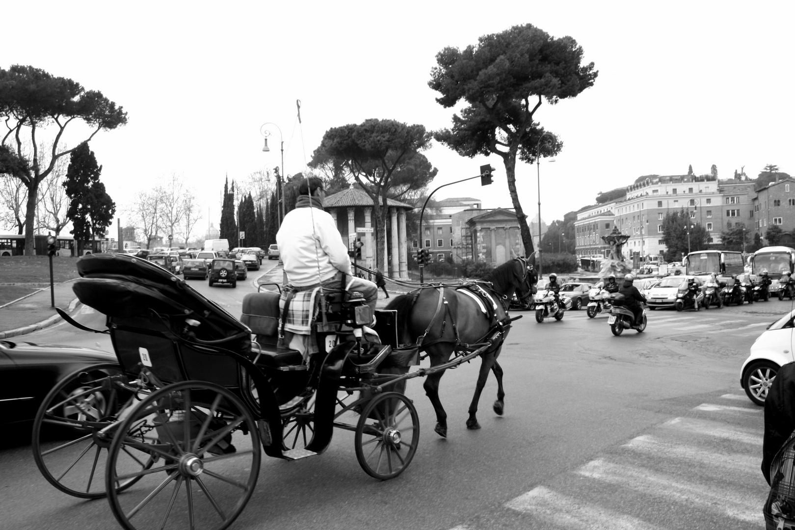 Horse ? Roma ?