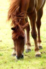 ... horse shakes his mane